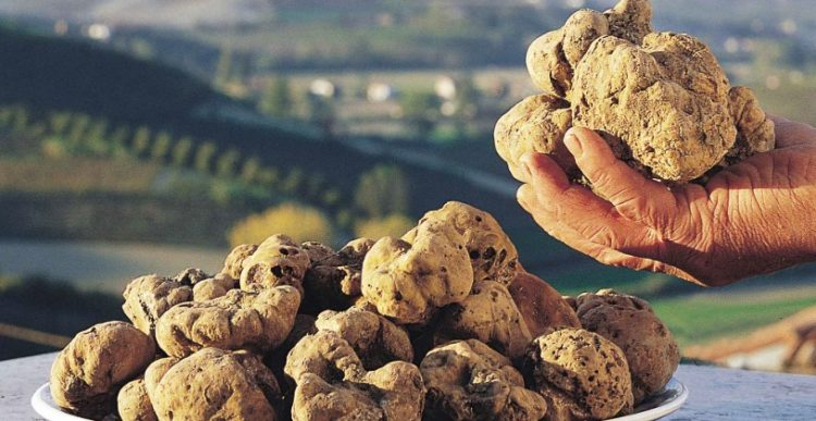 truffle prices